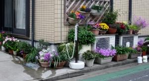 西水元三丁目の花壇