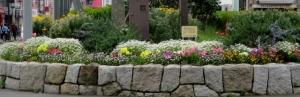 金町駅北口の花壇