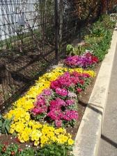 小松の花こみち花壇