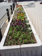 亀有花風船の会花壇