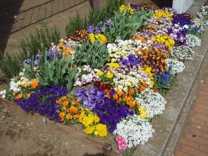 区役所いこいのガーデンクラブ花壇