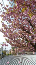 春といえば