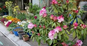 東水元1丁目の花壇