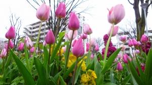 春のプレゼント