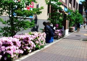 金町のつつじの花
