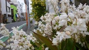 道端の植物園