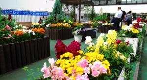 区役所の2階の花園