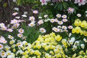 新柴又駅前の花々