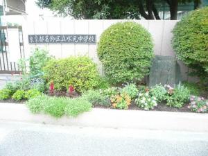 夏の花壇 その後