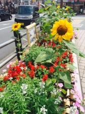 花風船の会 亀有駅前花壇 夏風景