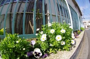 東新小岩保育園の花壇