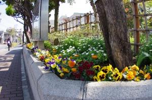 上小松小学校の花壇