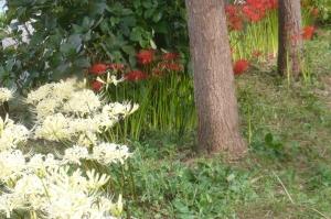 杜の中の紅白