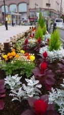 10月の花壇