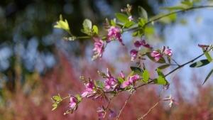 秋の七草苑