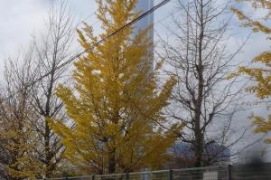 秋は樹木も、花のように