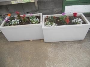 秋から冬に向けての花植えを実施