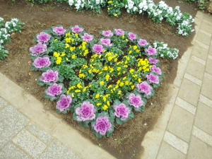 冬の花壇へ