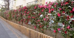 原田小学校の花壇
