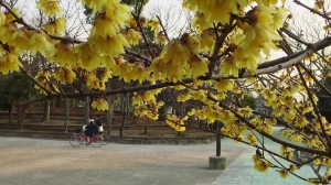 春が来てる