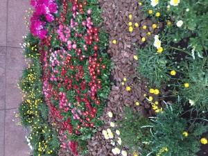農産高校の花壇