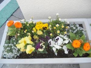 卒業式に向けての花植え