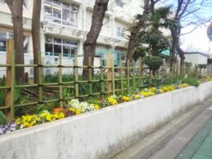 校舎のまわりはお花でいっぱいです♪
