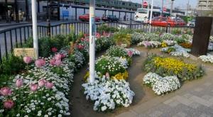 金町南口の花壇