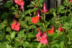 香りほのぼの春の庭