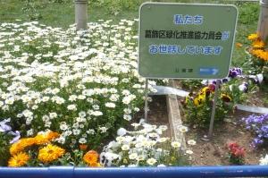 春爛漫の公園花壇(1)