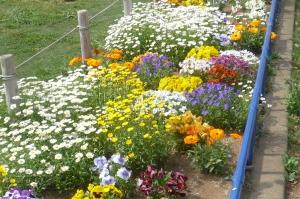 春爛漫の公園花壇(4)