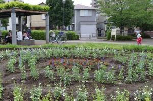 花のまちづくり協議会 平成30年度第1回花苗の植え付け後の状況報告