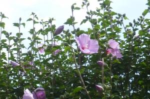 夏到来の花