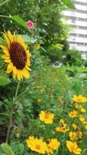 緑も花も多い庭