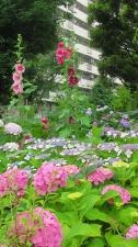 散歩コースの庭