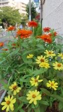 日常に花あり
