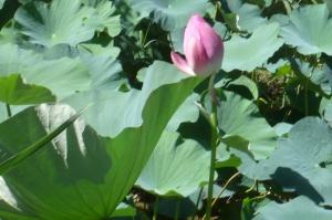 今夏の水元公園の自然を散策する3