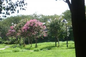 今夏の水元公園の自然を散歩する7