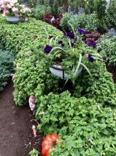 金町南口広場の花壇