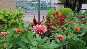 花ある公園
