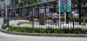 金町駅南口広場