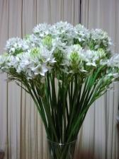 ❤ 白い綺麗な花 ❤
