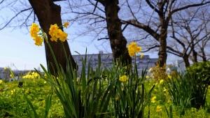 かわいい春が来た。
