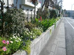 北側も花が咲いてます!