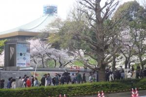 桜満開の春(九段下界隈)