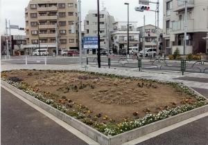 柴又フロリズ花壇(桜道中学校)
