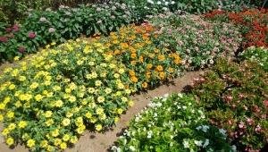 花いっぱいの花壇✿