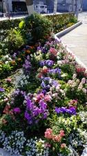 花の絨毯?
