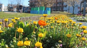 春、これから