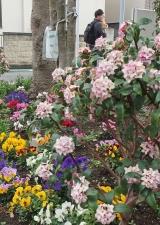 花の保育園